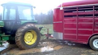 Hauling Cattle in Mud.