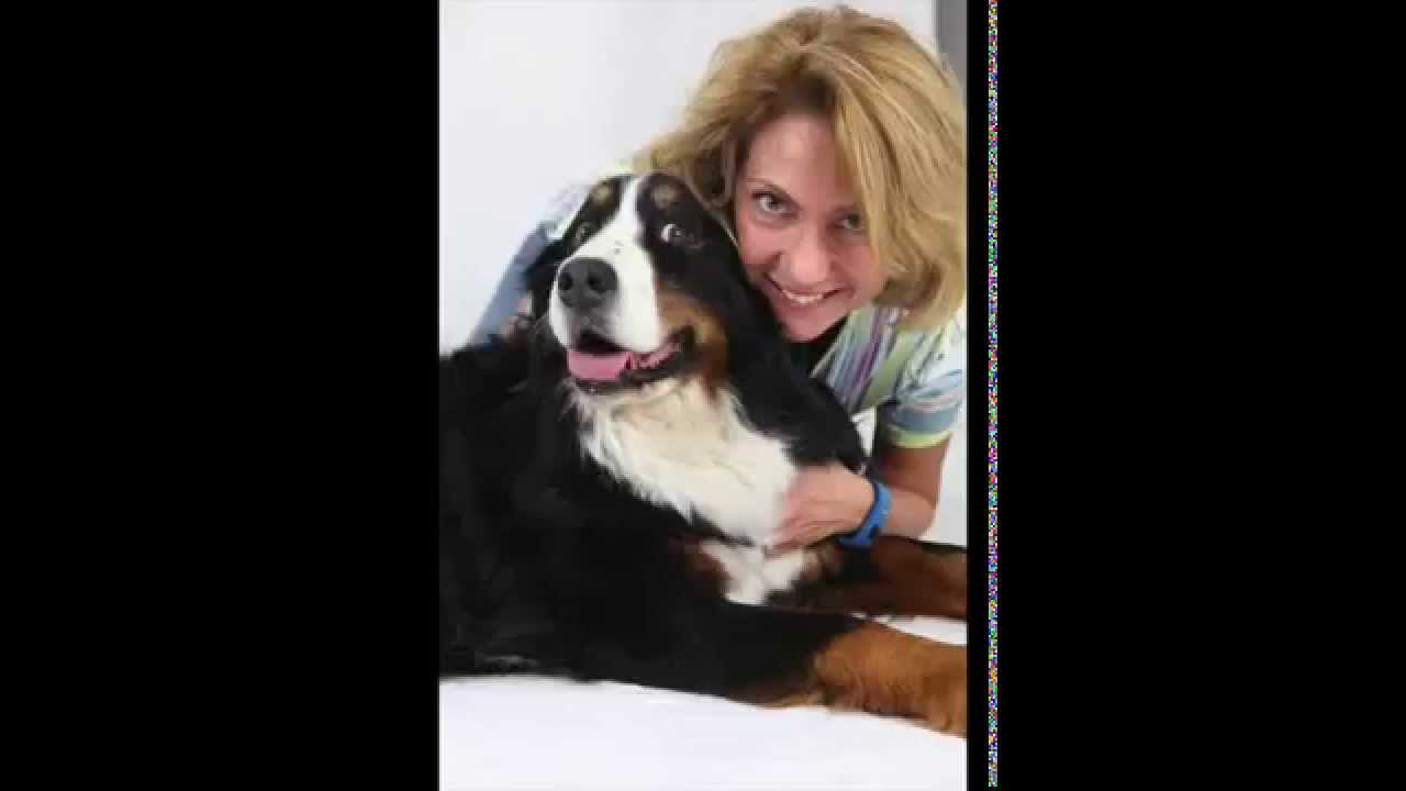 Silvia cattani bufale su cani e gatti 1 parte youtube for Youtube cani e gatti