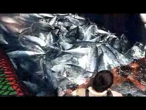 Akdeniz balıkcılığı 2  Turkish fishermen