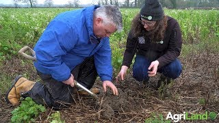 How to examine the soil beneath your cover crops
