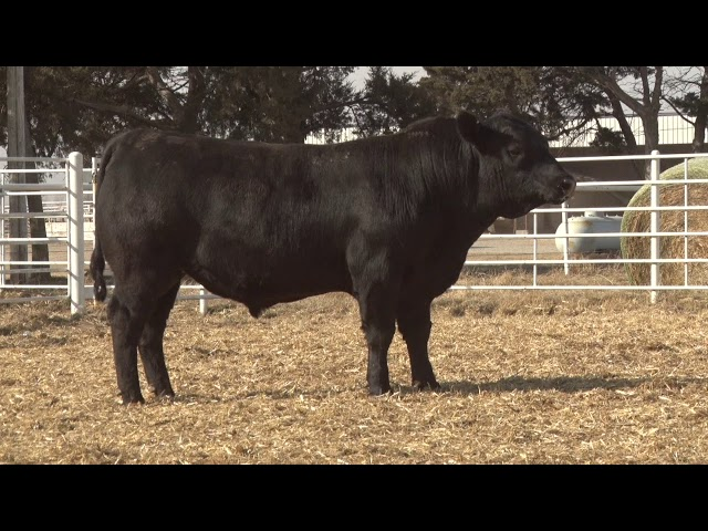 Express Ranches Lot 296
