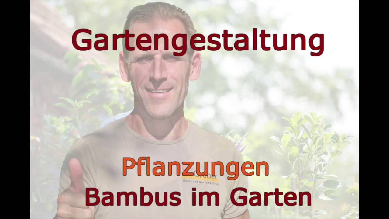 Gartentipps Bambus Hd - Youtube Bambus Im Garten Tipps