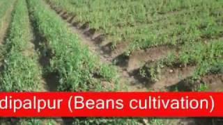 1.Adeel Ahmad agriculture farm @depalpur, pakistan
