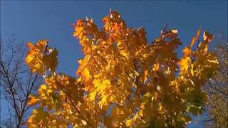 МИР МУЗЫКИ  – Звуки венского вальса  – Иоганн Штраус  –  Memento Patriae