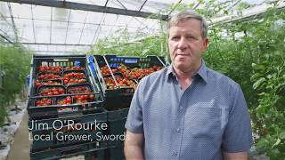 Grá Grower, Jim O'Rourke
