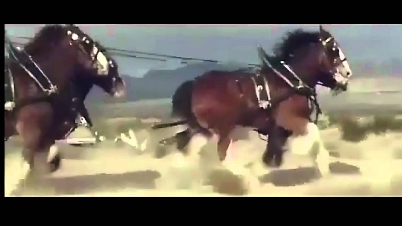 Budweiser cowboy commercial youtube aloadofball Images