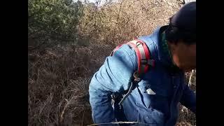 고흥 마복산 단엽 난초산행