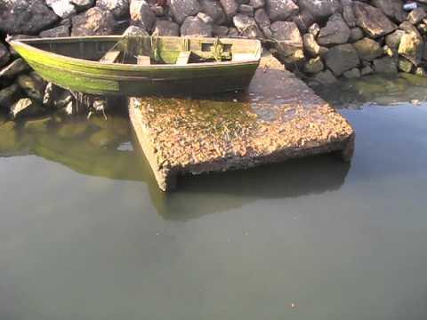 Image result for fotos dos esgtos emOLhão para a Ria Formosa