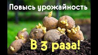 Как повысить урожай картофеля в 3 раза? Хитрости выращивания картофеля!