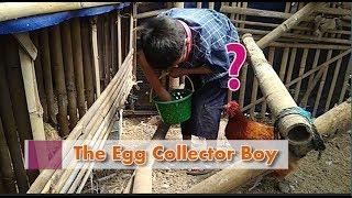 Ayam 20 ekor menghasilkan berapa telur sehari ? # Part 2 Ternak Skala Rumahan