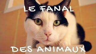 LE FANAL DES ANIMAUX