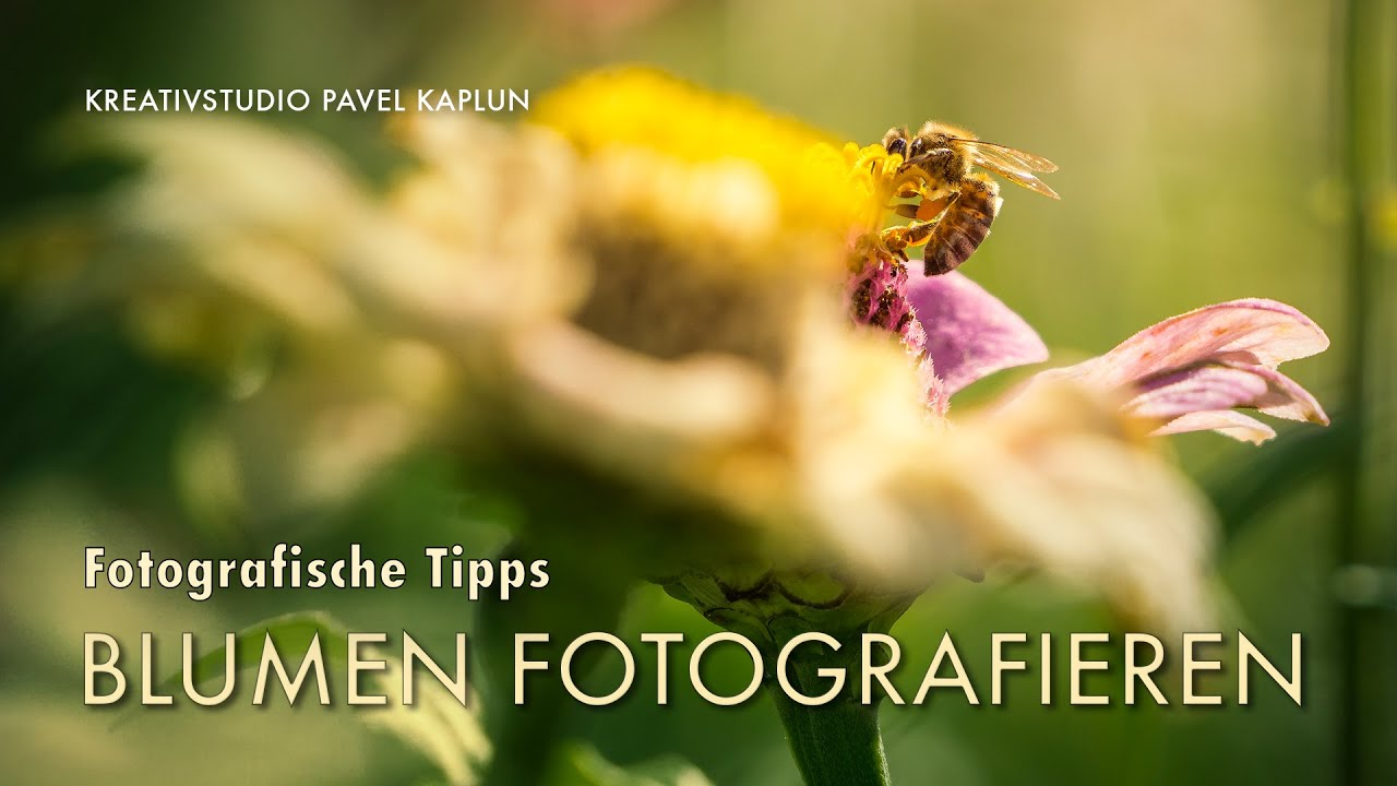 Tipps Zum Fotografieren fotografische tipps blumen fotografieren