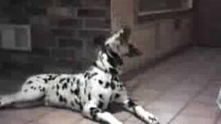 Pratande Hundar