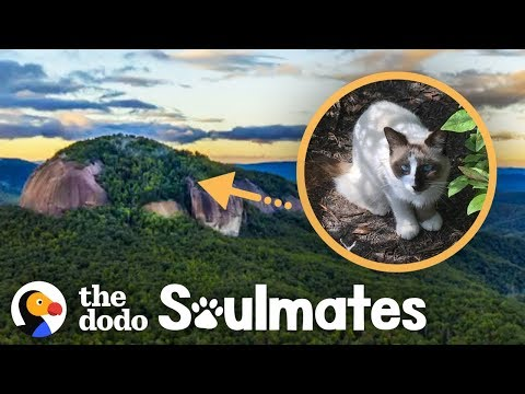 Couple Rescues Cat Stranded On Mountaintop | The Dodo Soulmates