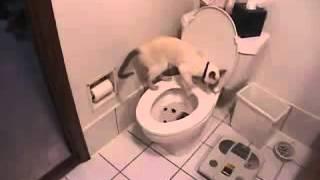 Кот приучился ходить в туалет на унитаз. Система