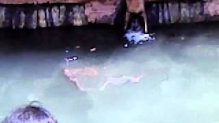 Monkeys diving at yaganti temple