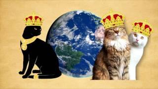 The black cat superstition
