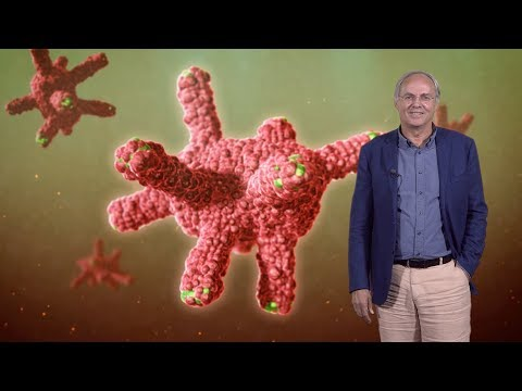 Hans Clevers (Hubrecht I., UU) 1: Discovery And Characterization Of Adult Stem Cells In The Gut