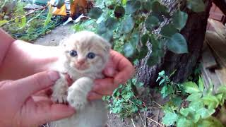 Очень красивые котята от простой кошки