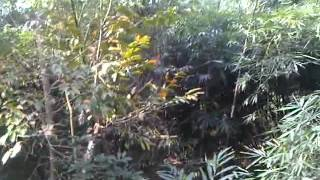 Download Video sex di hutan MP3 3GP MP4