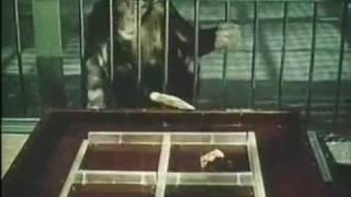 Думают ли животные ( 5 из 6 )