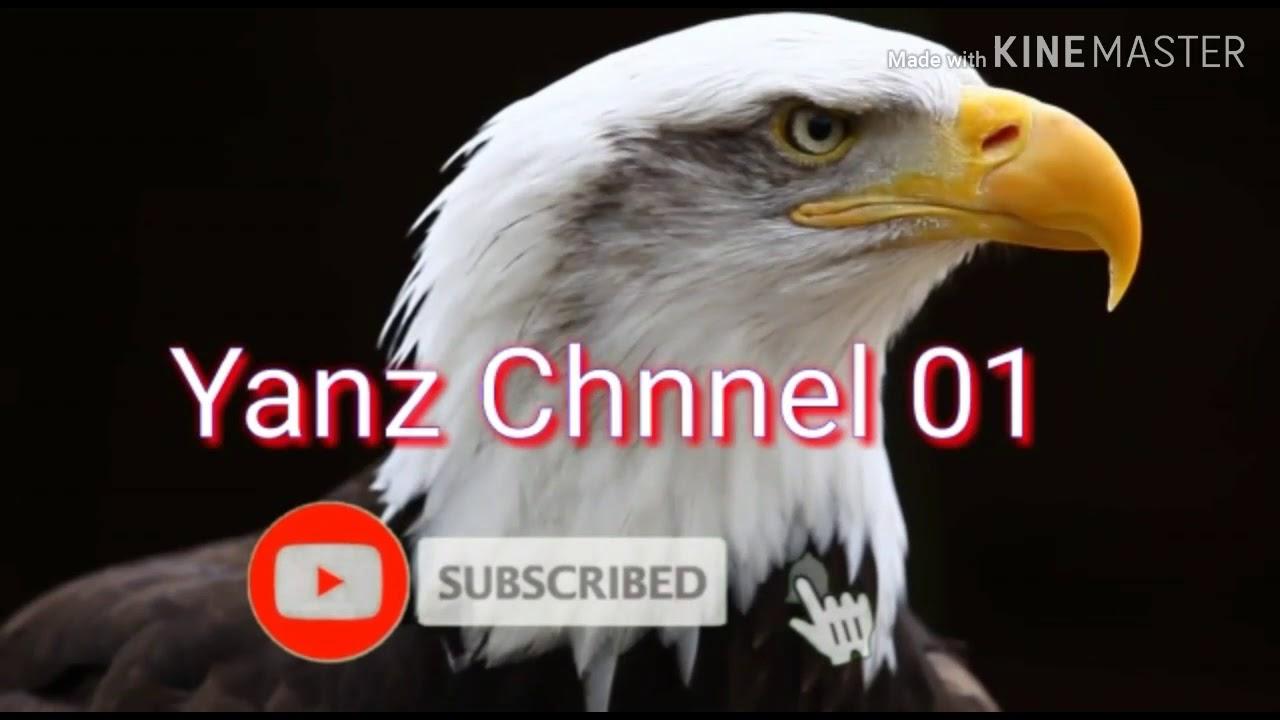 BUDIDAYA IKAN LELE DI KOLAM KECIL 👍 - YouTube