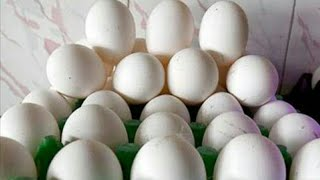 Today Egg Rate   Today's Poultry Rate