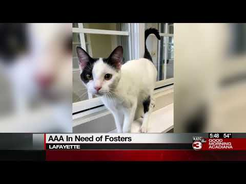 Acadiana Animal Aid in need of fosters