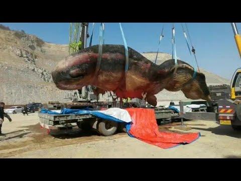 شاهد: نفوق حوت عنبر طوله 18 متراً قبالة الساحل الصيني  - نشر قبل 24 دقيقة