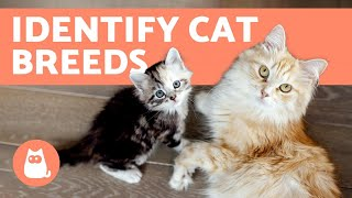 How to Tell the BREED of Your CAT