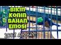 Konin Gacor Full Isian Tembakan Tajam Besetan Pedas Bikin Konin Bahan Langsung Emosi Bongkar Isian  Mp3 - Mp4 Download