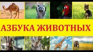 АЗБУКА животных для детей. Алфавит для самых маленьких. Учимся читать буквы с алфавитом животных.
