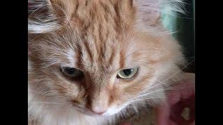 Котик ест овсянку