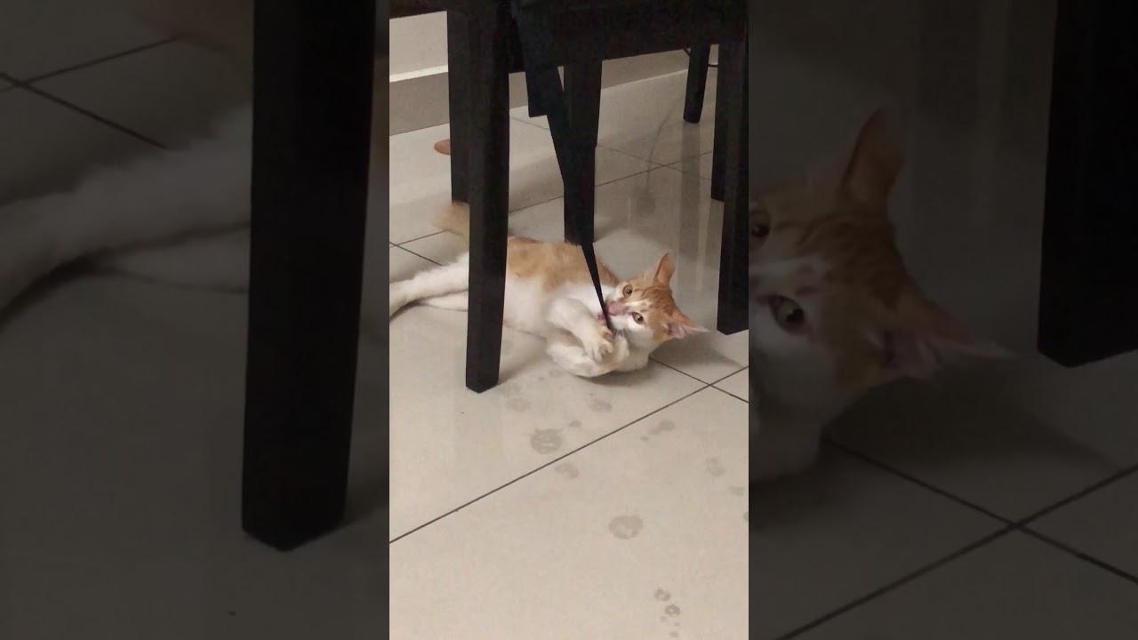 Enrique Iglesias Cat