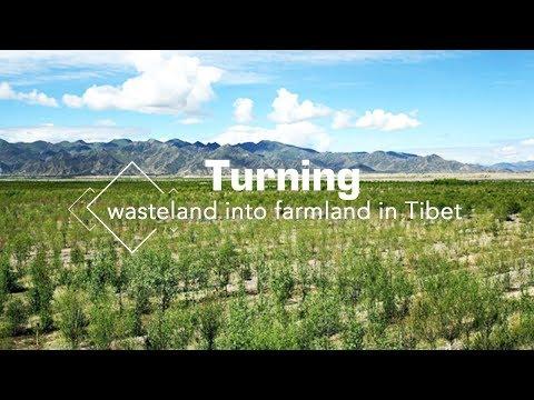 Live: Turning wasteland into farmland in Tibet植树造林建设绿色雪域高原