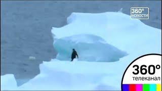 Флаг Волоколамского района появится в Антарктиде