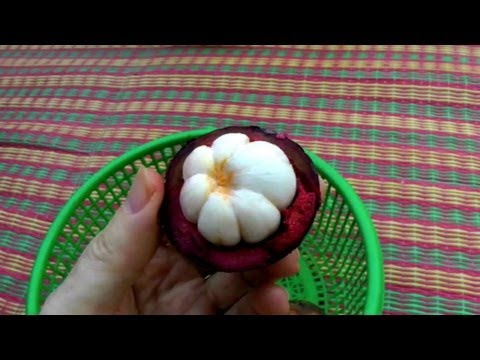 Picking and Eating a Ripe Purple Mangosteen | Garcinia Mangostana | HD Video