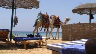 heaven on earth. / marsa alam - gorgonia beach resort - summer 2011