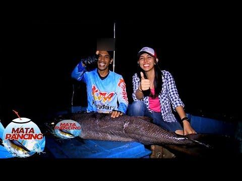 """Ikan """"Oil Fish"""", Membuat Para Pemancing Jadi Sakit Pinggang - Mata Pancing (21/4)"""