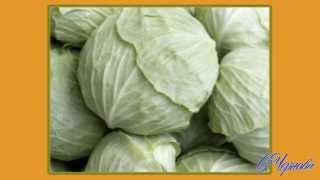 видео Полезные советы по квашению капусты.