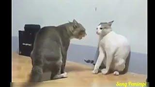 Viral video lucu ngakak kocak hewan 1  bahasa indonesia
