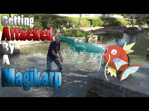 Pokemon GO | PokemonGo Adventures! Getting Attacked by a Magikarp