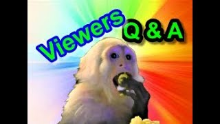 Capuchin Monkey Pet Answers to Viewers Questions