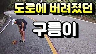 [RescueDog]로드킬? 도로 한가운데 앉아있던 아기 강아지에게 다가가자..