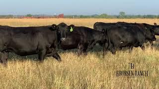 JC Bred Heifers, Brorsen Ranch LLC