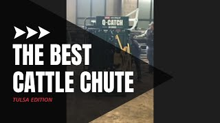 Cattle Squeeze Chute Demo | Live Cattle Working Demonstration