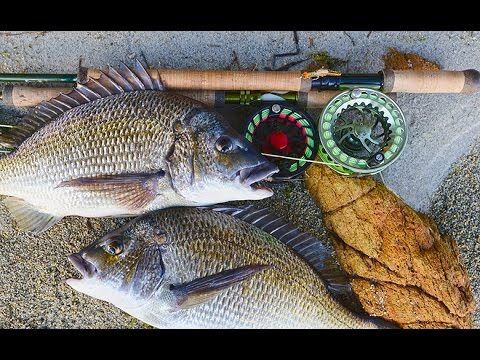 Catch Bream On Fly — Starlo Gets Reel