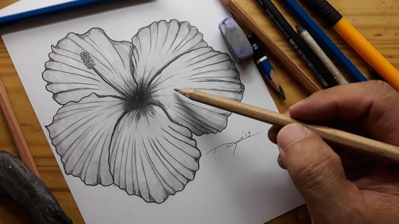 Cara Menggambar Menggambar Bunga Sepatu Dengan Mudah Menggunakan Pensil Youtube