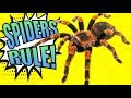 SPIDERS! - Educational Video For Kids