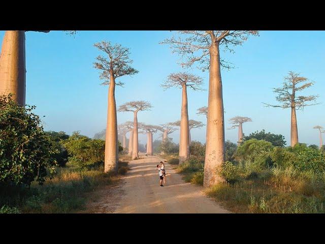 Bienvenidos a Madagascar!